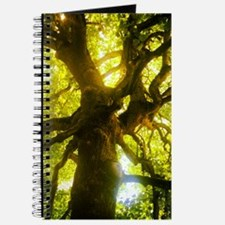 Under the Oak Tree Journal