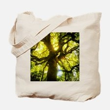 Under the Oak Tree Tote Bag