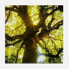 Under the Oak Tree Tile Coaster