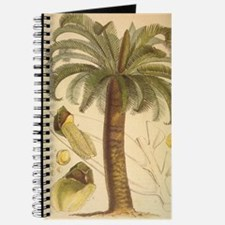 Encephalartos_longifoliusHR.jpg Journal