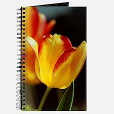 Red Yellow Tulips 574 Journal