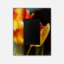 Red Yellow Tulips 667 Picture Frame