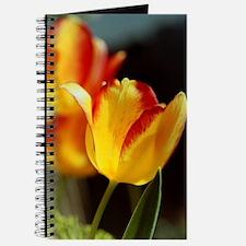 Red Yellow Tulips 667 Journal