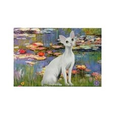 Lilies (#2) & Devonshire Rex Rectangle Magnet