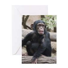 Young Chimp 02 Greeting Cards