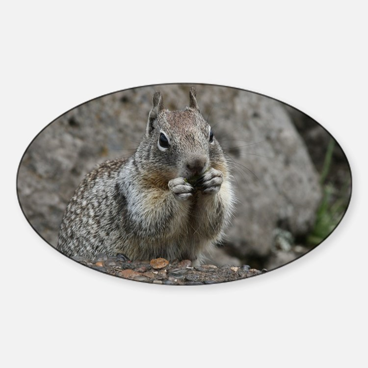 Squirrel Eating 4 Decal