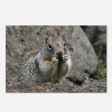 Squirrel Eating 4 Postcards (Package of 8)
