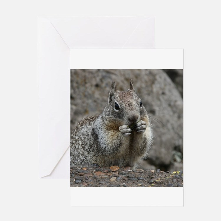 Squirrel Eating 4 Greeting Cards