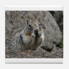 Squirrel Eating 4 Tile Coaster