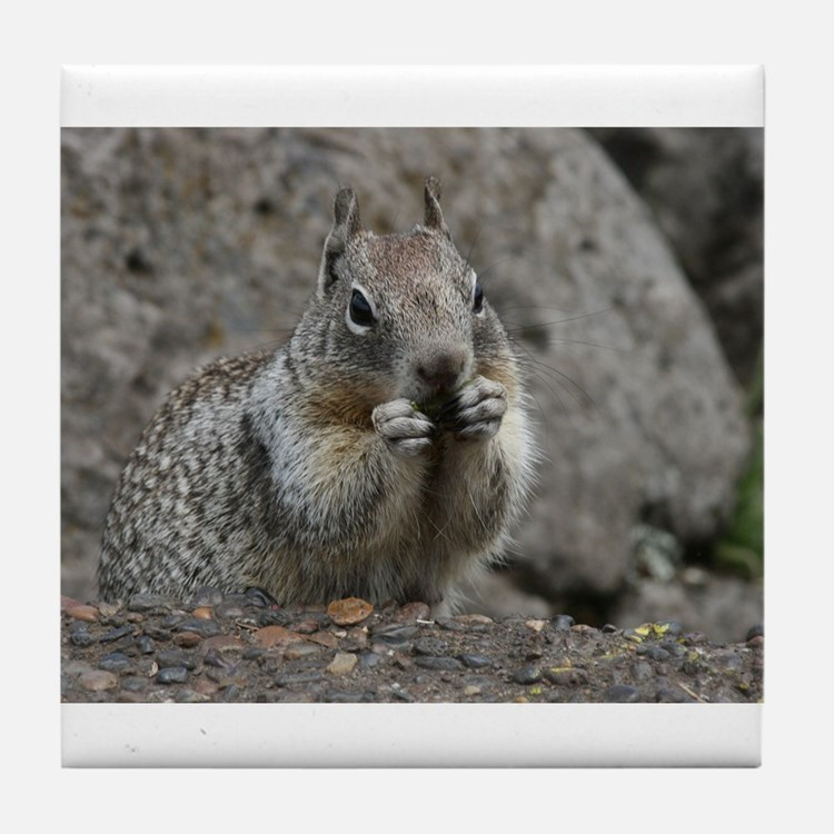 Squirrel Eating 4 Tile Coaster