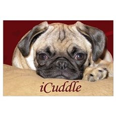 Adorable iCuddle Pug Puppy Poster