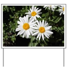 pretty pure white daisy flowers. Yard Sign