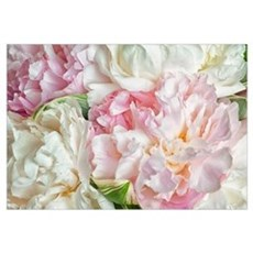 Blooming Peonies Canvas Art