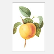 Vintage Apple by Redoute Postcards (Package of 8)