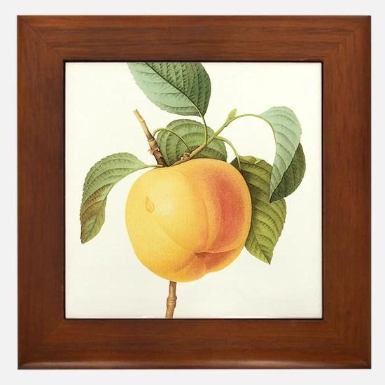 Vintage Apple by Redoute Framed Tile