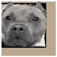 Pitbull Dog Framed Print