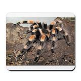Tarantula spider Mouse Pads
