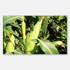 Cute Gmo corn Decal