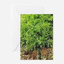Cute Organic farming Greeting Card