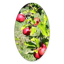 Unique Apple farms Decal