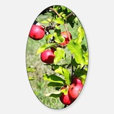 Cute Apple orchard Decal