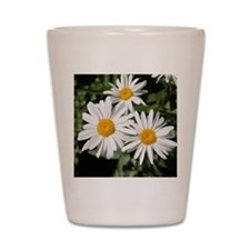 pretty pure white daisy flowers. Shot Glass