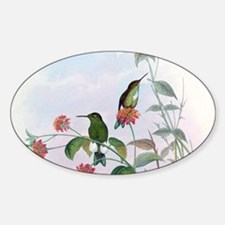 Emerald-bellied Puffleg Hummingbird Sticker (Oval)