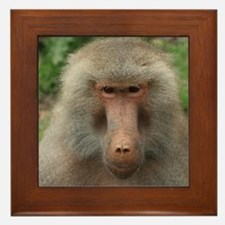 See You Soon, Baboon Framed Tile