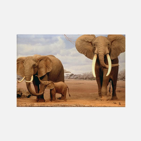 Family Of Elephants Magnets