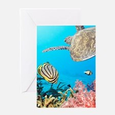 Turtle and Fishes Under Water Greeting Cards
