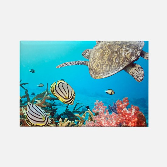 Turtle and Fishes Under Water Magnets