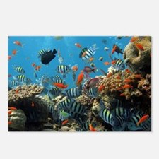 Fishes and Underwater Plants Postcards (Package of