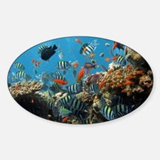 Fishes and Underwater Plants Decal