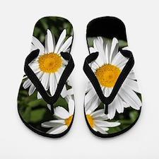 pretty pure white daisy flowers. Flip Flops