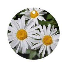 pretty pure white daisy flowers. Ornament (Round)