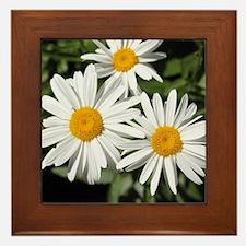 pretty pure white daisy flowers. Framed Tile