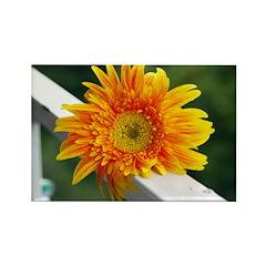 Yellow Gerber Daisy Rectangle Magnet (10 pack)