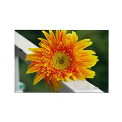 Yellow Gerber Daisy Rectangle Magnet (100 pack)