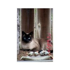 Cat Comfort Rectangle Magnet
