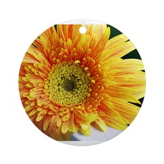 Yellow Gerber Daisy close up Ornament (Round)