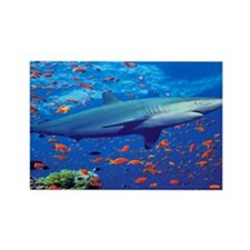 Colorful Shark Rectangle Magnet