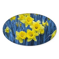 Daffodil Invasion Decal