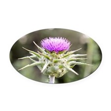 Thistle in Bloom Oval Car Magnet