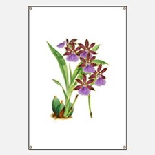 Zygopetalum-clayi Purple Orchid Banner