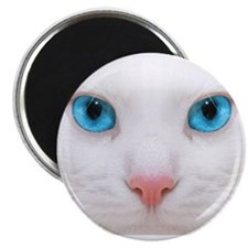 "Cute Blue eyes 2.25"" Magnet (10 pack)"