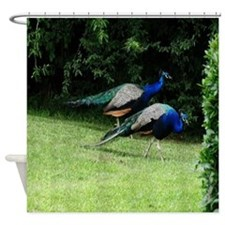 Peacocks Shower Curtain