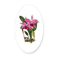 Laeliocattleya-Aleschiana Orchid Oval Car Magnet