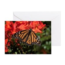 Honeysuckle Monarch Butterfly Beauty Greeting Card