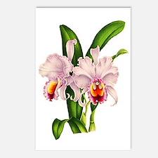 Violet Whisper Cattleyea Postcards (Package of 8)