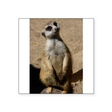 """Cute Meerkats Square Sticker 3"""" x 3"""""""